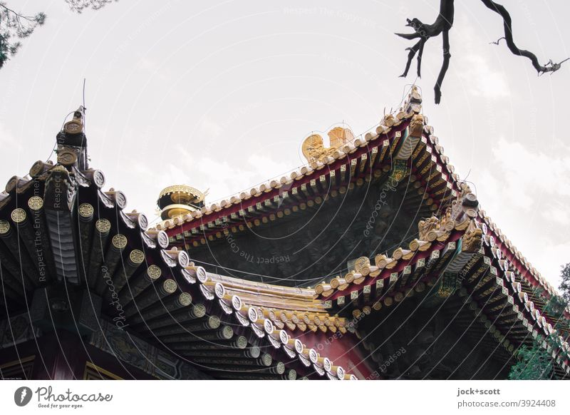 Artfully decorated roofs of the forbidden city World heritage Cinese architecture Arts and crafts Pagodal roof Palace Tourist Attraction Forbidden city