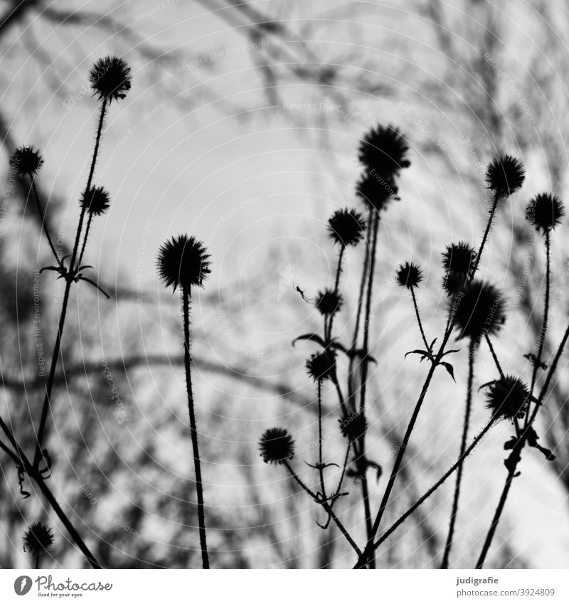 Meadow in black and white Nature Blossom Plant wax Black & white photo Flower Garden Stalk handle Leaf