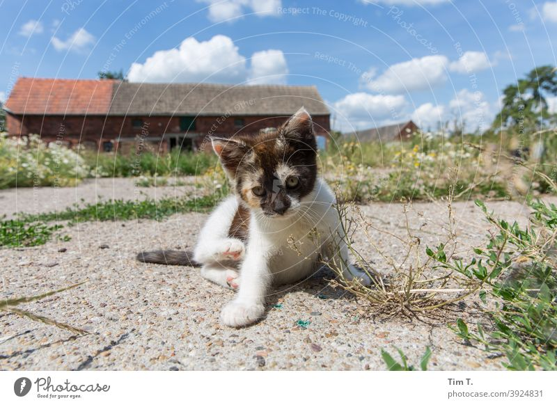 a farm in the Prignitz. A small cat sits and looks into the camera Cat putty Farm snotty Pelt Pet Animal Colour photo Animal portrait Domestic cat Cute hangover