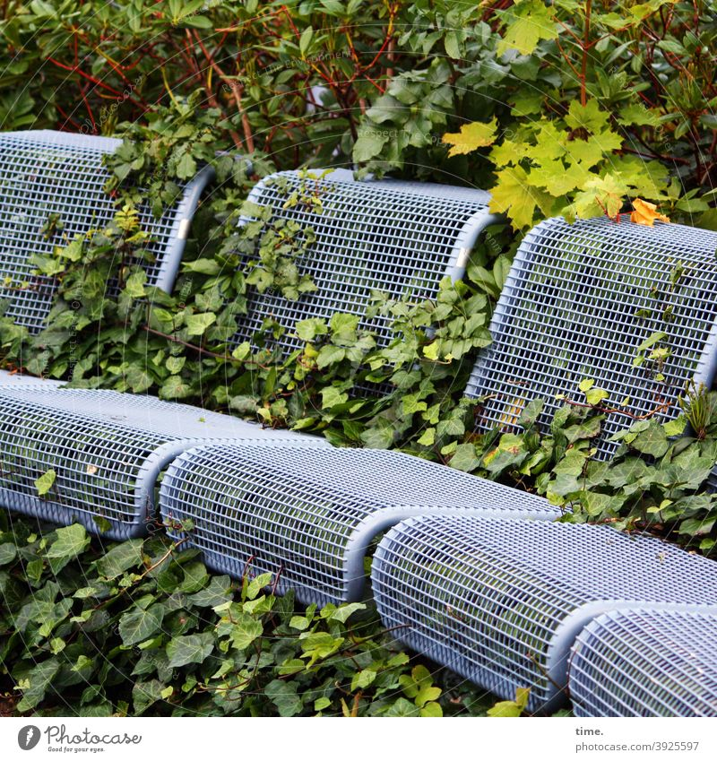 unshaven seats Bench Ivy Seating Green Art wax leaves bush overgrow Whimsical Occupying invasion Nature Metal Unkempt landart