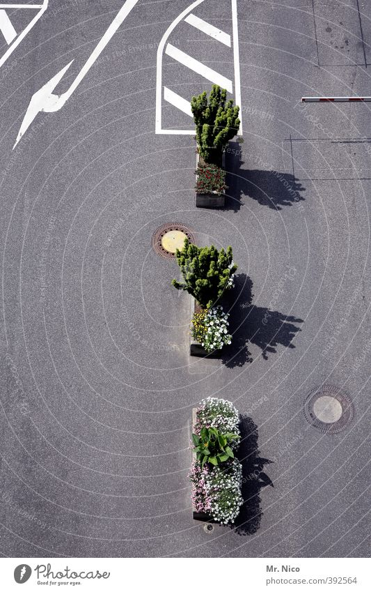 City Plant Flower Environment Street Lanes & trails Places Bushes Asphalt Arrow Traffic infrastructure Border Parking lot Crossroads Embellish Road traffic