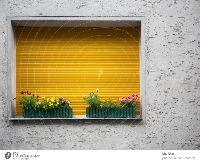 opposite number Lifestyle Living or residing Flat (apartment) Decoration Plant Flower Building Facade Yellow Roller blind Window board Window box Closed