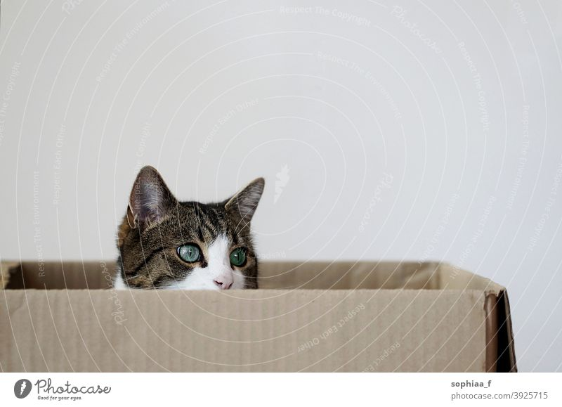 cat sitting in a cardboard box carton curious inside face portrait cats hidden pet package watch look packaging cute delivery adorable alone gift animal