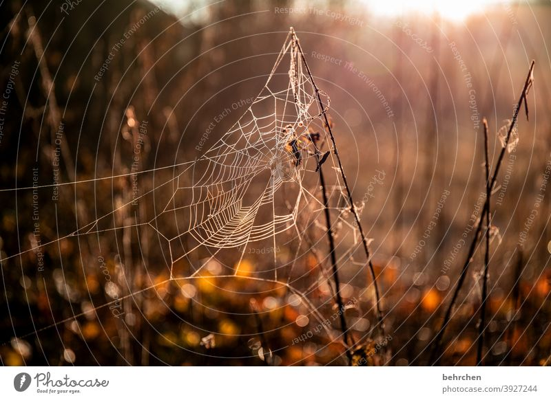 Indian summer...for willma;)) Seasons Winter Autumn Forest Work of art spiderweb Dreamily Back-light Light Field Flower Twigs and branches Garden Meadow Sunrise