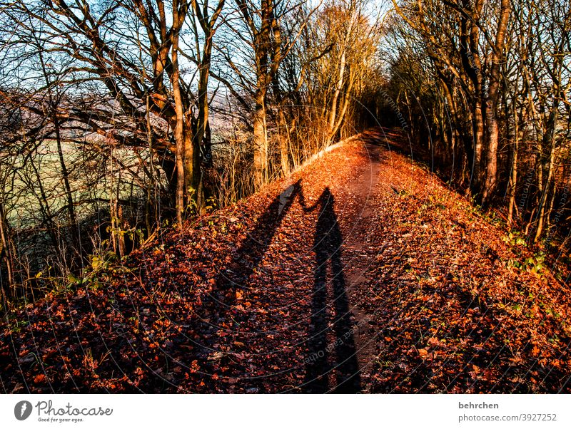 autumn love Automn wood Sunbeam Idyll Blue sky Sky autumn walk Autumnal colours autumn mood Seasons Autumn leaves Calm Beautiful weather Environment Nature
