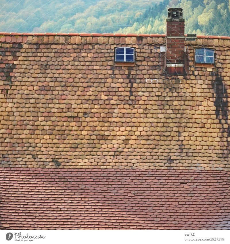 Penthouse Roof Old Skylight Roofing tile Window Tall Above Building House (Residential Structure) Detail Exterior shot Colour photo Decline Historic Facade