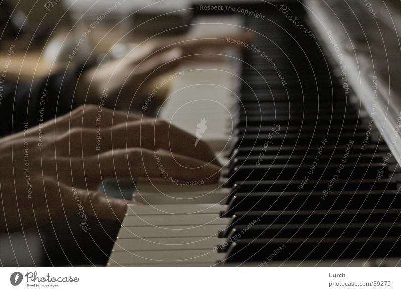 pianist Piano Hand Man Touch Wing Pianist
