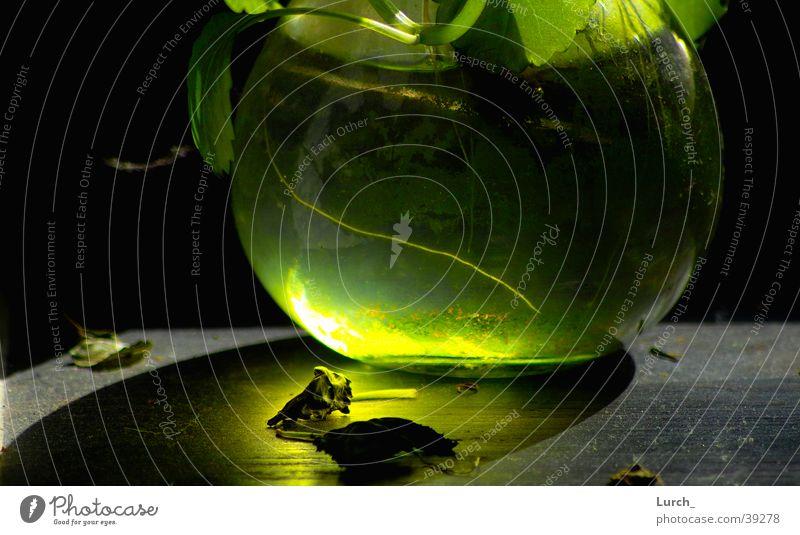 Green Obscure Vase Algae