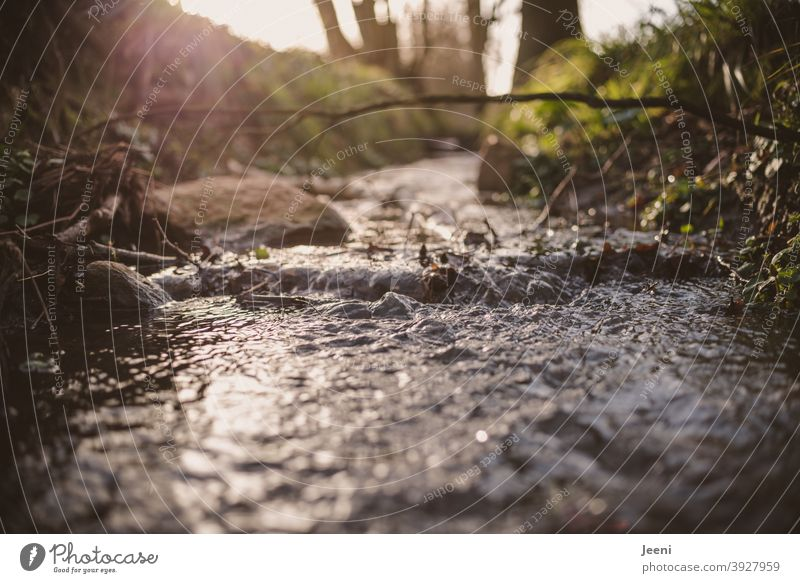 Down at the brook, there flows the clear cold water | The backlight of the sunshine catches in the water Brook Water Flow River from Cold chill Fresh