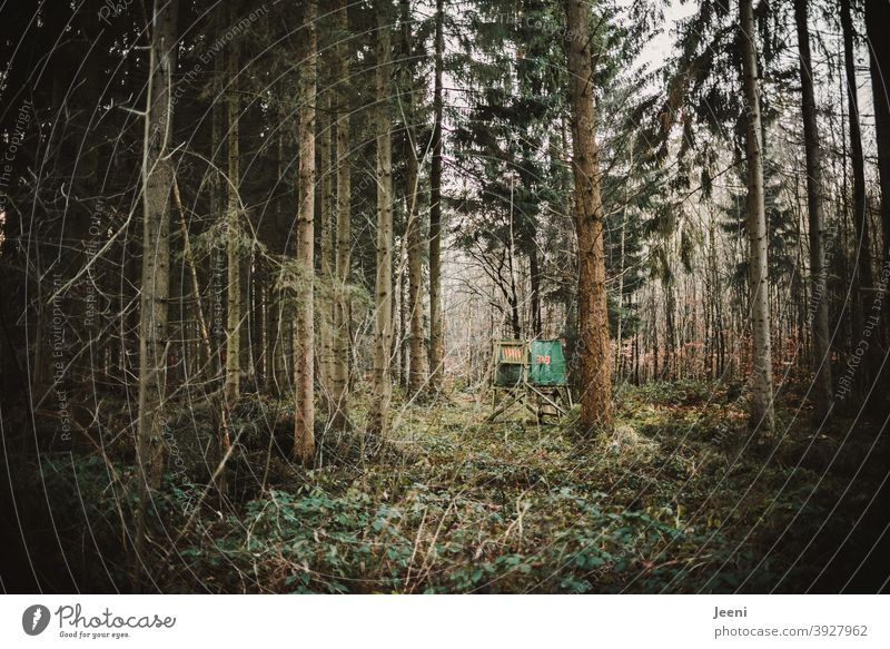 In the dark forest is a small clearing with a high seat for the hunter Forest Coniferous trees Coniferous forest Mixed forest Dark Tree Nature Fir tree
