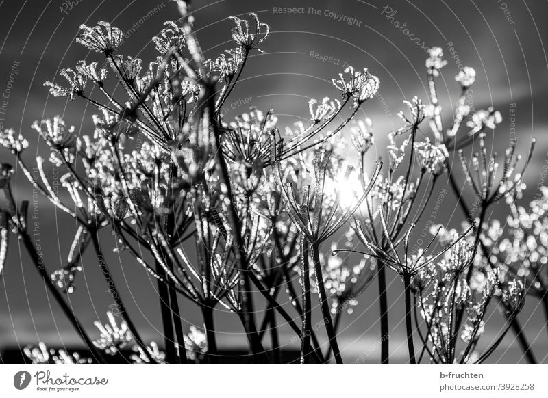 cold winter day, frozen plants Ice crystal Winter Cold chill Frost Nature Frozen Freeze Hoar frost Snow Exterior shot White December Winter's day