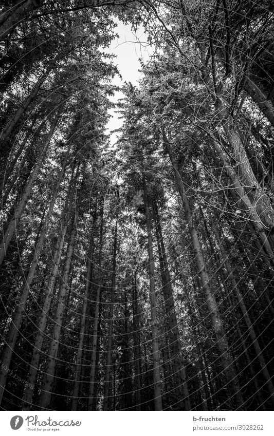 can't see the forest for the trees or something. Forest Black & white photo Tree Nature Landscape Environment Deserted Exterior shot Autumn Plant Day naturally