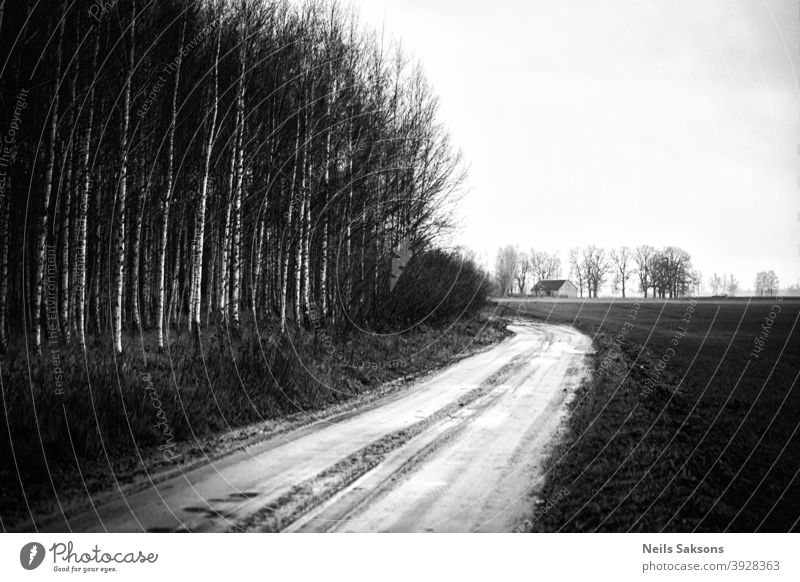 country pathway leading to farmstead on field. birch forest near road. Latvian landscape in December. house messuage Birch tree gravel road dirt road travel