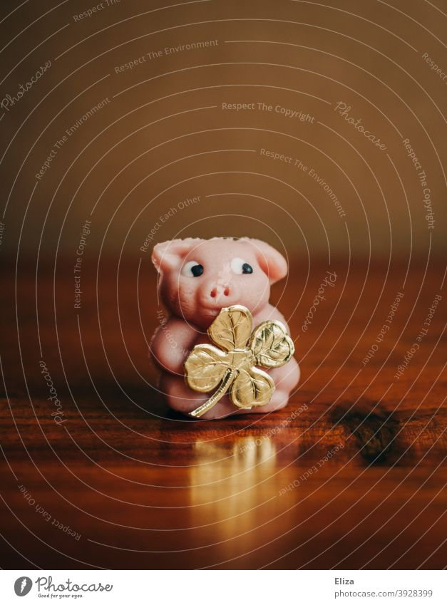 Lucky pig with golden four-leaf clover as a lucky charm for New Year's Eve. Good luck charm Swine Rabbit's foot symbol Happy new year Cloverleaf