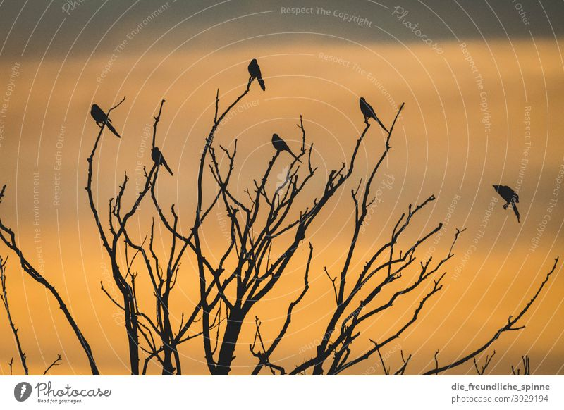 Birds in the sunset Ornith Sunset Sunrise Back-light Flying Yellow Exterior shot Colour photo Animal Sky Twilight Deserted Sunlight Nature Clouds Evening Light