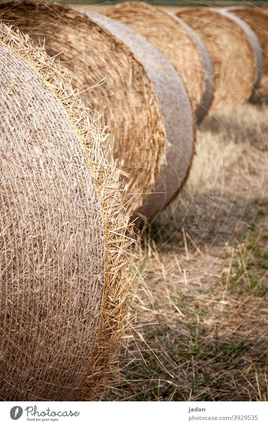 dreaming a little of summer. Field Summer Agriculture Harvest Nature Landscape Bale of straw Meadow Yellow Deserted Straw sunny weather Roll Row Lie Round
