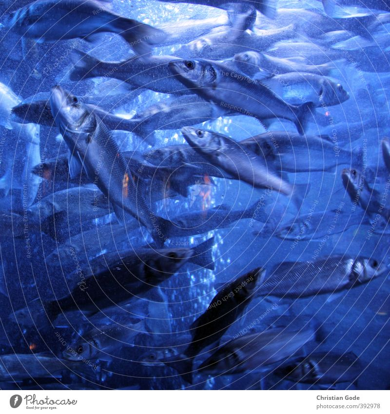 Nature Blue Ocean Landscape Environment Eyes Lake Waves Elements Fish Lakeside Square Chaos Pond Flare Fin