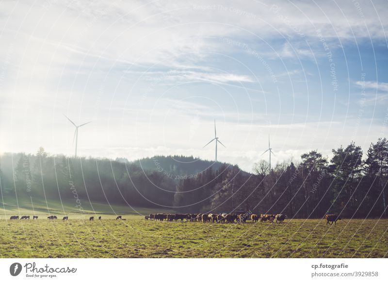 Herd of cattle in front of three wind turbines Pinwheel cows Forest Willow tree Sunlight Winter Landscape Clouds Deserted eco-power climate-damaging
