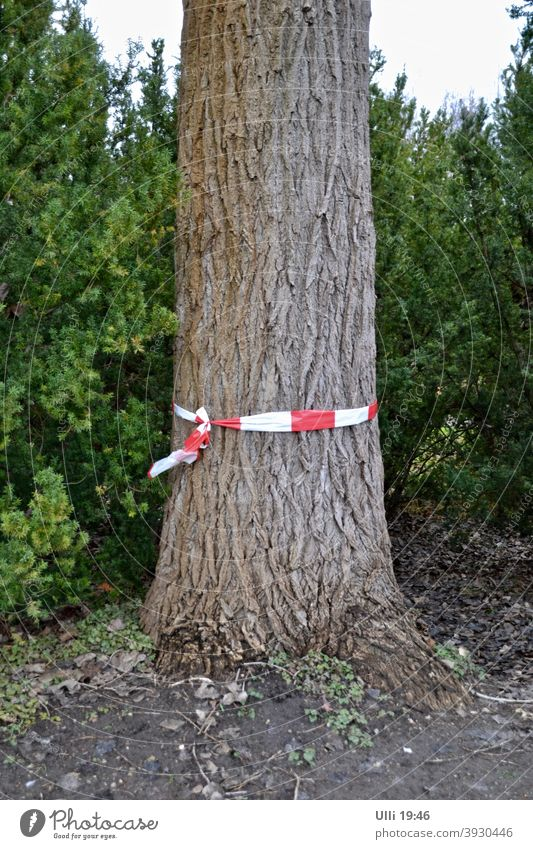 Marked tree by the side of the road. Sick? Too fat? Tree Tree trunk Tree in the foreground Reddish white mark green background marked tree barrier tape