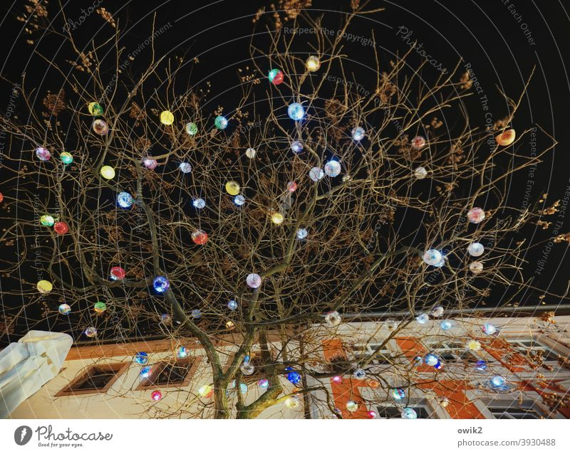 Christmas tree Above Dark Tree Twigs and branches Night sky Hang Plastic Colour photo Detail Structures and shapes Exterior shot Christmas & Advent