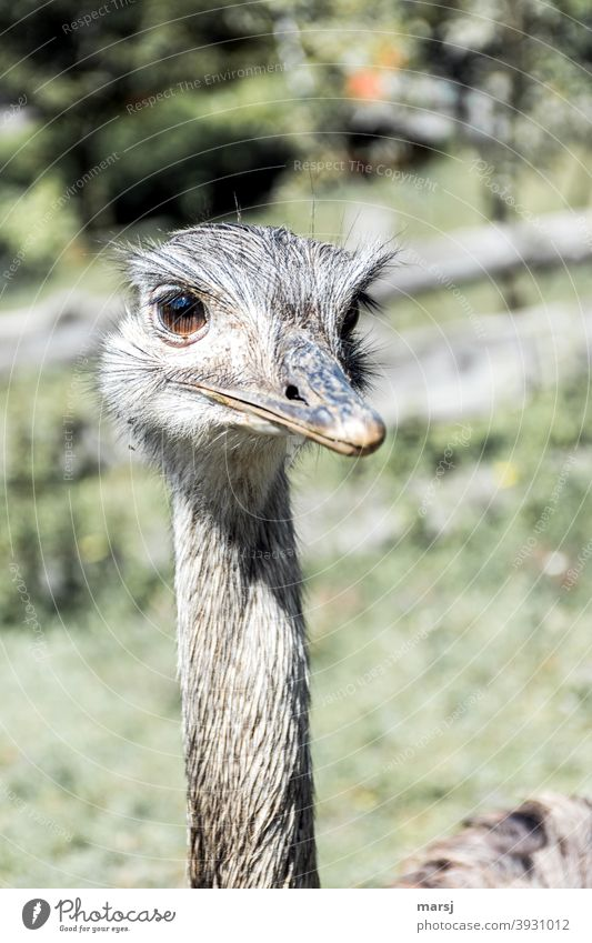 ¡Trash! 2020   Come to think of it, 2020 was kind of crap, said the friendly Nandu, keeping his beak shut and looking contentedly into the future. Animal