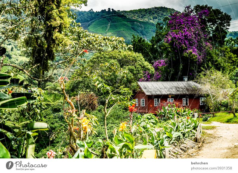 fairytale world dwell everyday life Life Garden Environment Climate change Tea picker Environmental protection Sky Clouds Wanderlust Plant Agricultural crop
