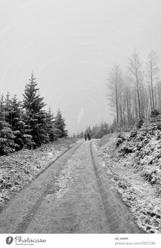 Snowy path Forest Winter Tree Cold Ice Frost Nature Exterior shot Landscape White Environment Weather Snowscape Climate Winter mood Fog Black & white photo