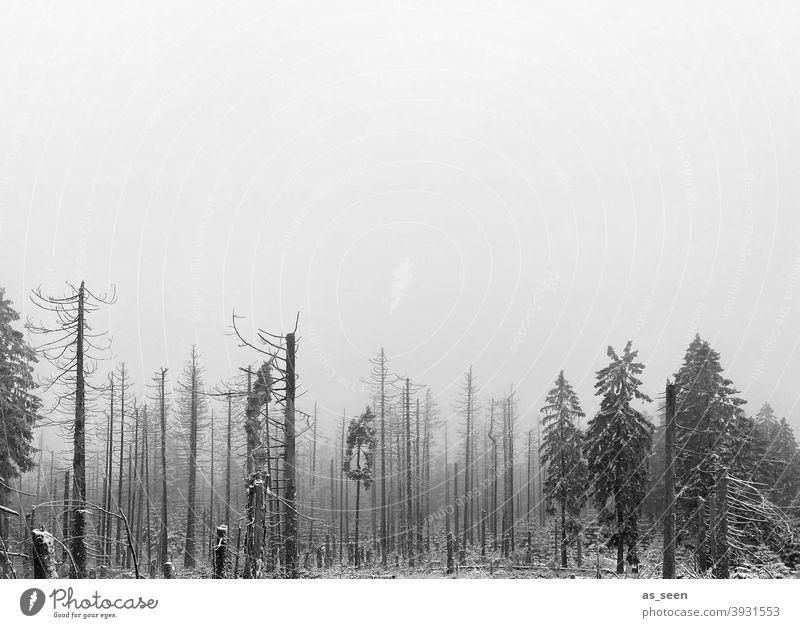 Forest dieback in the fog Forest death silhouettes Tree Nature Environment Exterior shot Tree trunk Deserted Wood Forestry Climate change