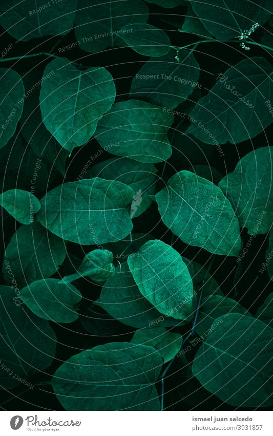 green plant leaves, green background leaf garden floral nature natural foliage decorative decoration abstract textured freshness outdoors beauty fragility