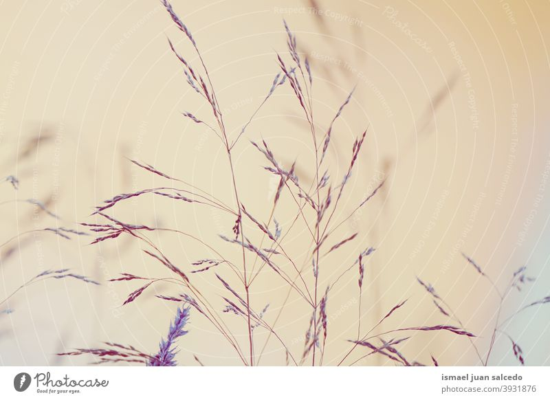 dry flowers with the sunset in the nature plants blue sky sunlight bright silhouette garden floral romantic beauty fragility freshness grass season background