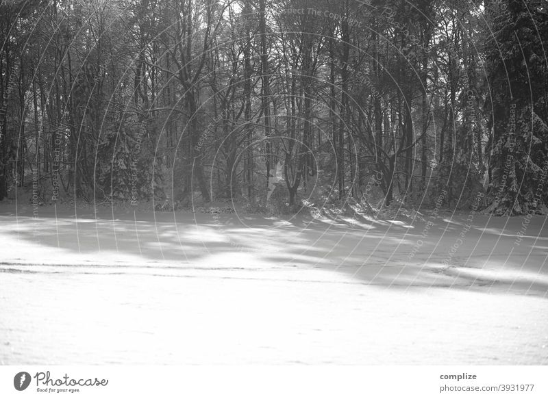 Black and white forest in winter - 1600 Snow Animal tracks Winter Powder snow White Walking Hiking outdoor Forest Cold pass somber Swabian Jura Winter forest