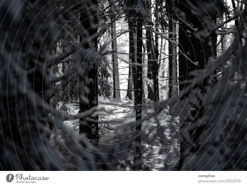 winter forest Snow Animal tracks Winter Powder snow White Walking Hiking outdoor Forest Cold pass somber Swabian Jura Winter forest snow forest Snow layer
