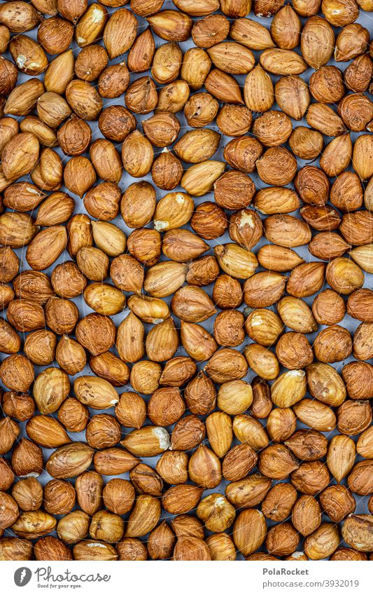 #S# cracked nuts Hazelnut hazelnuts Hazel brown shell waste Christmas & Advent Brown Many Food Nut Close-up Nutshell Deserted Vegetarian diet diverse Nut brown