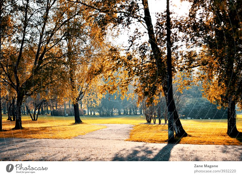Fall morning in city park fall autumn Autumnal seasons Park early morning golden hour Misty atmosphere Orange walk local park town
