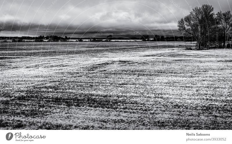 agricultural wheat field in Latvia. snow in December on tillage Agribusiness agriculture background clouds cold country cow crops dung ecology environment farm