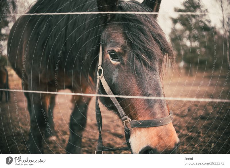 Perd at pasture Horse horses Ponytail Horse's head Mane Horse breeding Animal Exterior shot Animal portrait Brown Nature Colour photo Willow tree Animal face