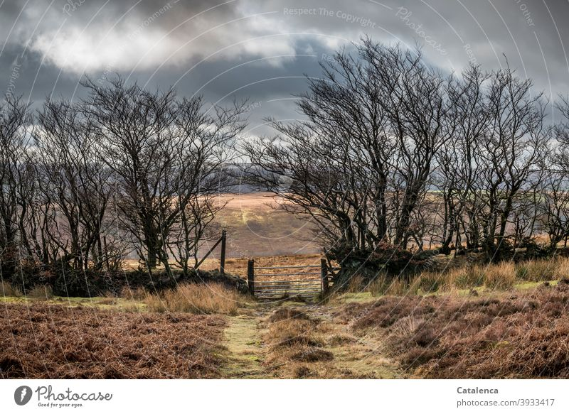The path leads through the gate in the wild hedge, from one pasture to the next in the high moorland landscape daylight Day Landscape Cold Winter Sky Grass