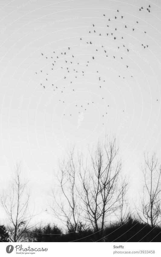 the point birds Flight of the birds Birds fly Flock of birds Meaning Freedom Ease birdwatching Easy Infinity flying birds atmospheric Flying grey sky