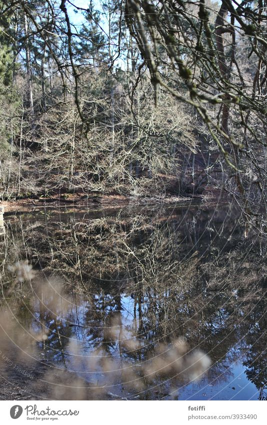 Oh, pond Lake Forest lake reflection Water Surface of water Nature Reflection Exterior shot Deserted Landscape Pond Idyll Calm Peaceful