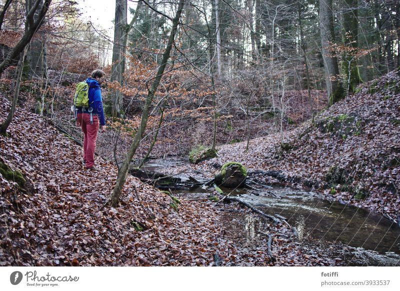 Forest with man with backpack Idyll Brook bachlauf Homey Nature Exterior shot Landscape Water Calm foliage watercourse Autumn hike autumn hike Man Red
