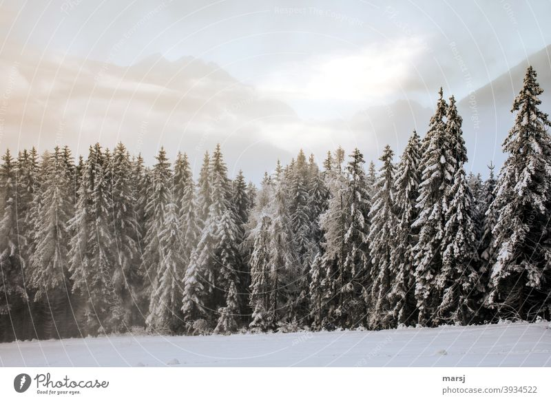 Winter forest with mountains in the background Winter's day Winter mood Winter magic winter Snow Cold Nature Spruce forest Landscape Frost Winter vacation White