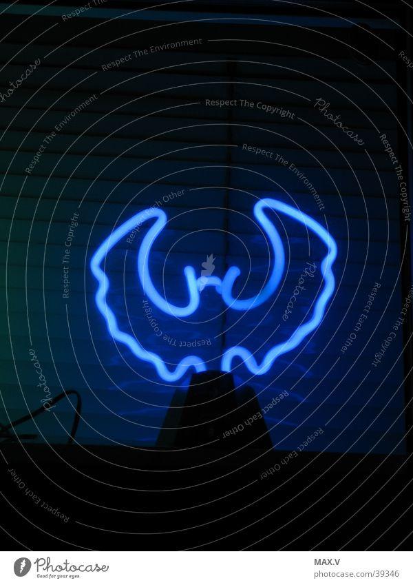 night mouse Bat Light Night Neon light Black Long exposure Blue