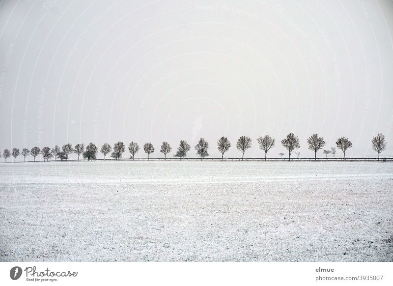 cloudy snow weather lies over the countryside left and right of the avenue with young maple trees / winter / connecting road / loneliness Avenue Winter Snow
