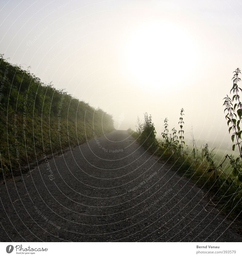 Sky Nature Blue Green White Summer Plant Sun Relaxation Black Yellow Grass Lanes & trails Gray Bright Line