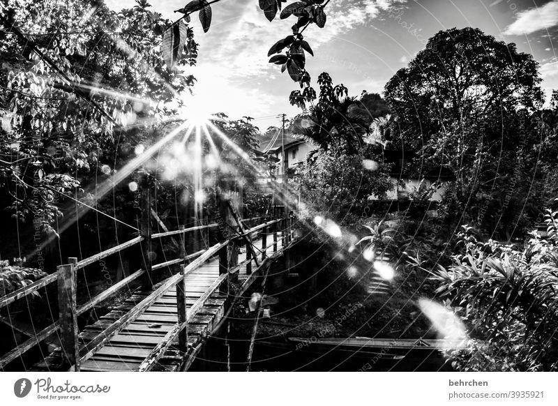 longing especially Sunbeam Landscape Virgin forest Nature Gorgeous beautifully Sunset Dusk Back-light Sunlight River Bridge Contrast Light Fantastic Trip Asia