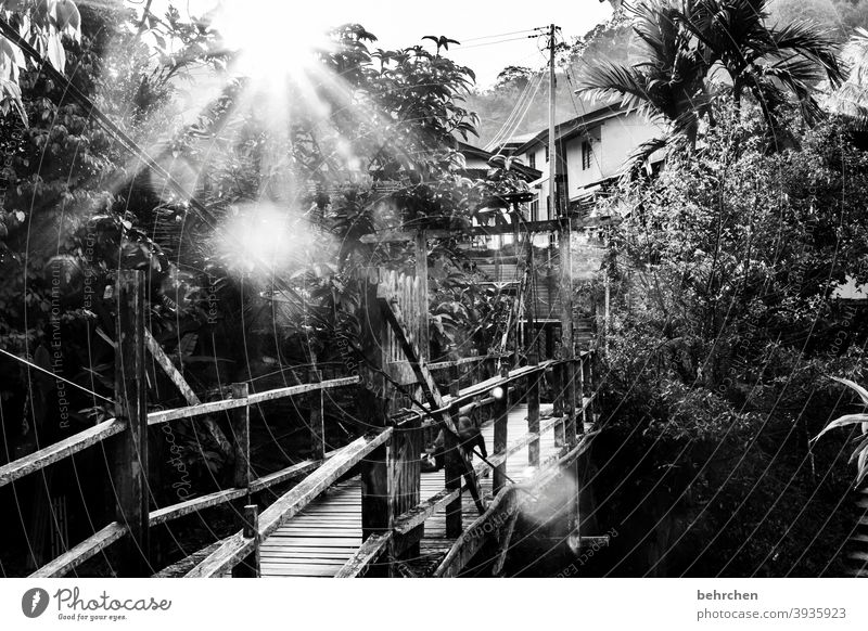 far away   favorite place at the other end of the world Black & white photo Impressive Exterior shot Tree Wanderlust Iban Authentic Malaya Borneo Freedom