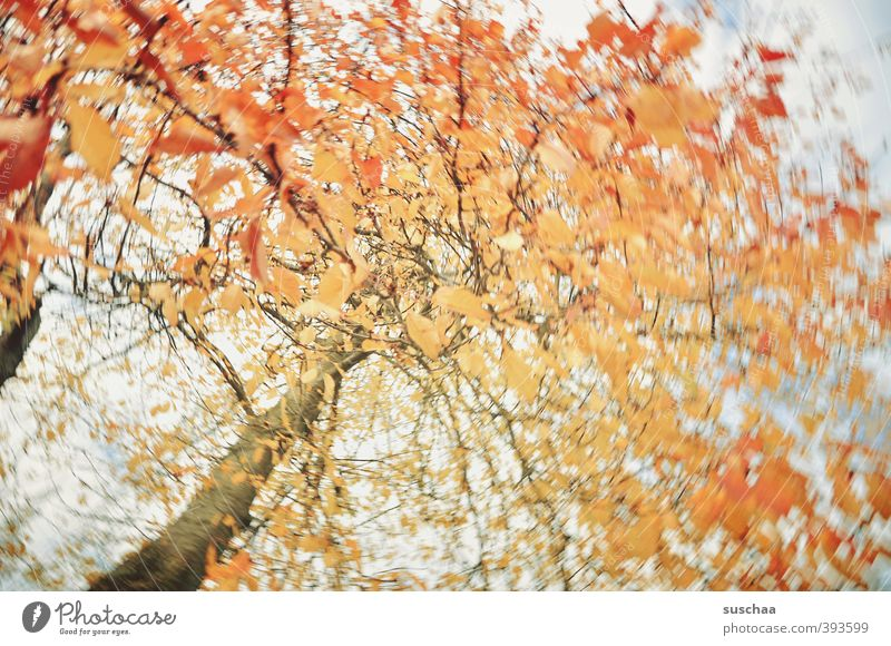 Sky Nature Tree Leaf Environment Autumn Air Orange Climate Political movements Branch Tree trunk Rotate