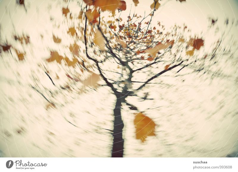 my autumn III Environment Nature Air Sky Autumn Climate Tree Leaf Retro Gold Rotate Political movements Dynamics whirl Subdued colour Exterior shot Experimental