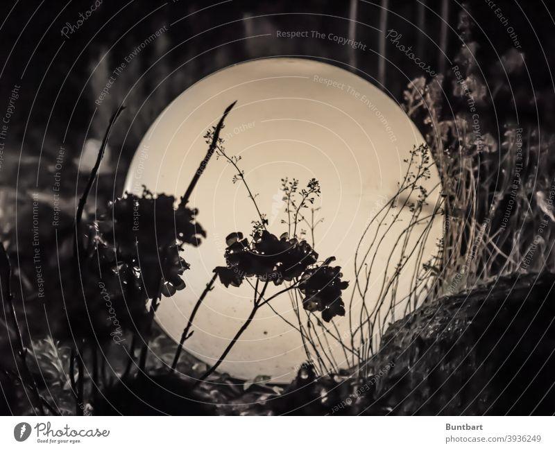 View in front of the glass ball Lamp Sphere Glass ball plants darkness Light Round Glittering Bright Dark Decoration Garden Garden Be Shadow Illuminate
