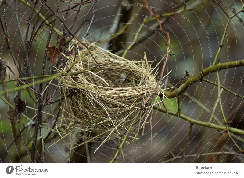 bird's nest Nest Nature Exterior shot stalks Grass Deserted Hedge branches Winter Twigs and branches Plant Tree Environment Autumn twigs Branches and twigs